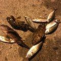 角へいさんの大分県速見郡での釣果写真