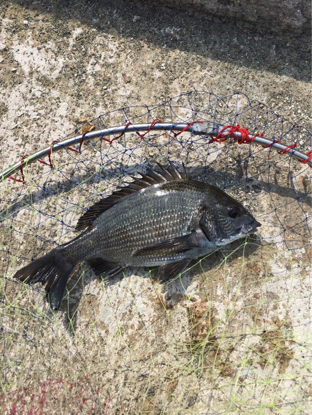 ササキさんの投稿画像,写っている魚は