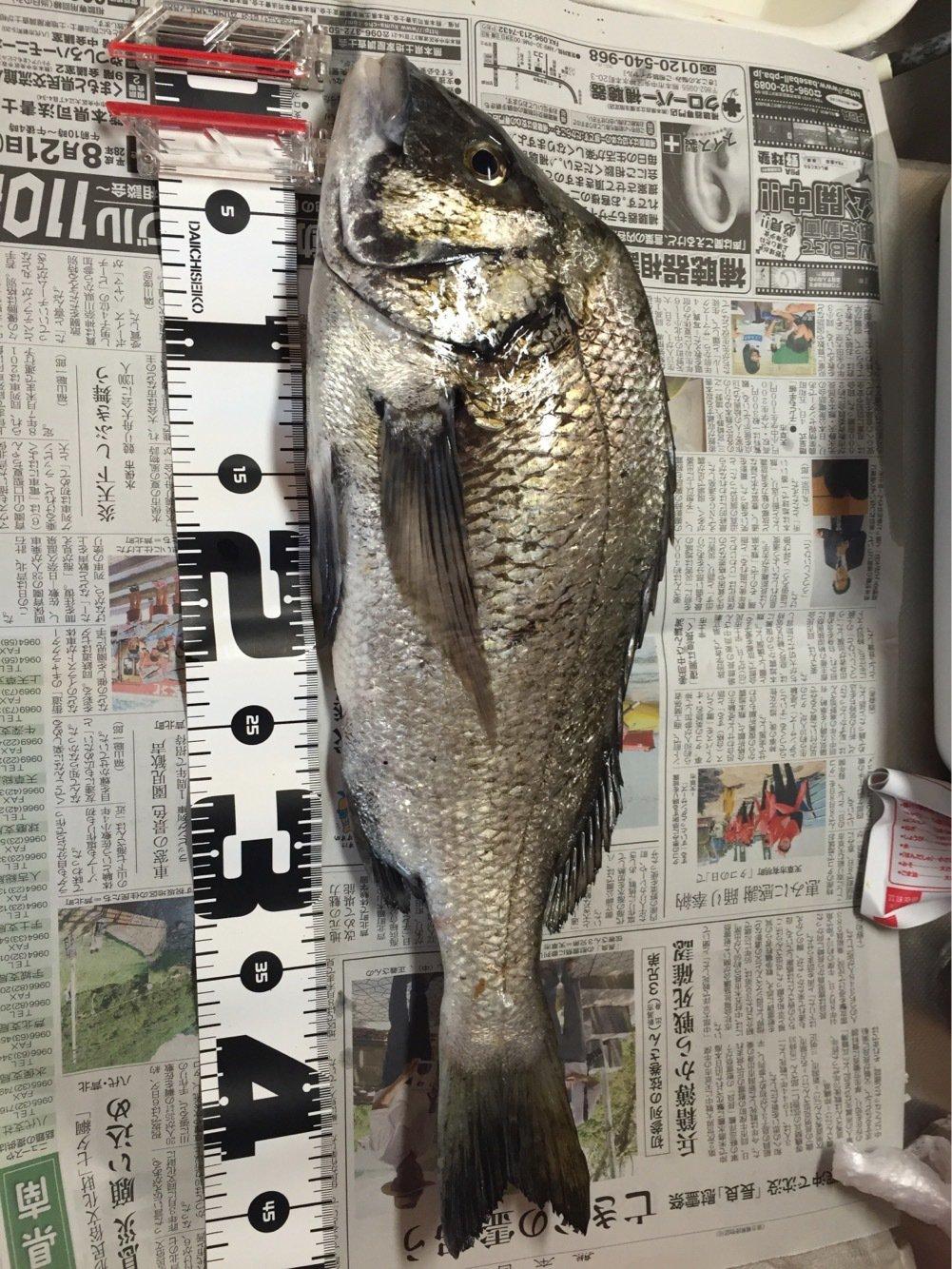 フルフルさんの投稿画像,写っている魚はクロダイ