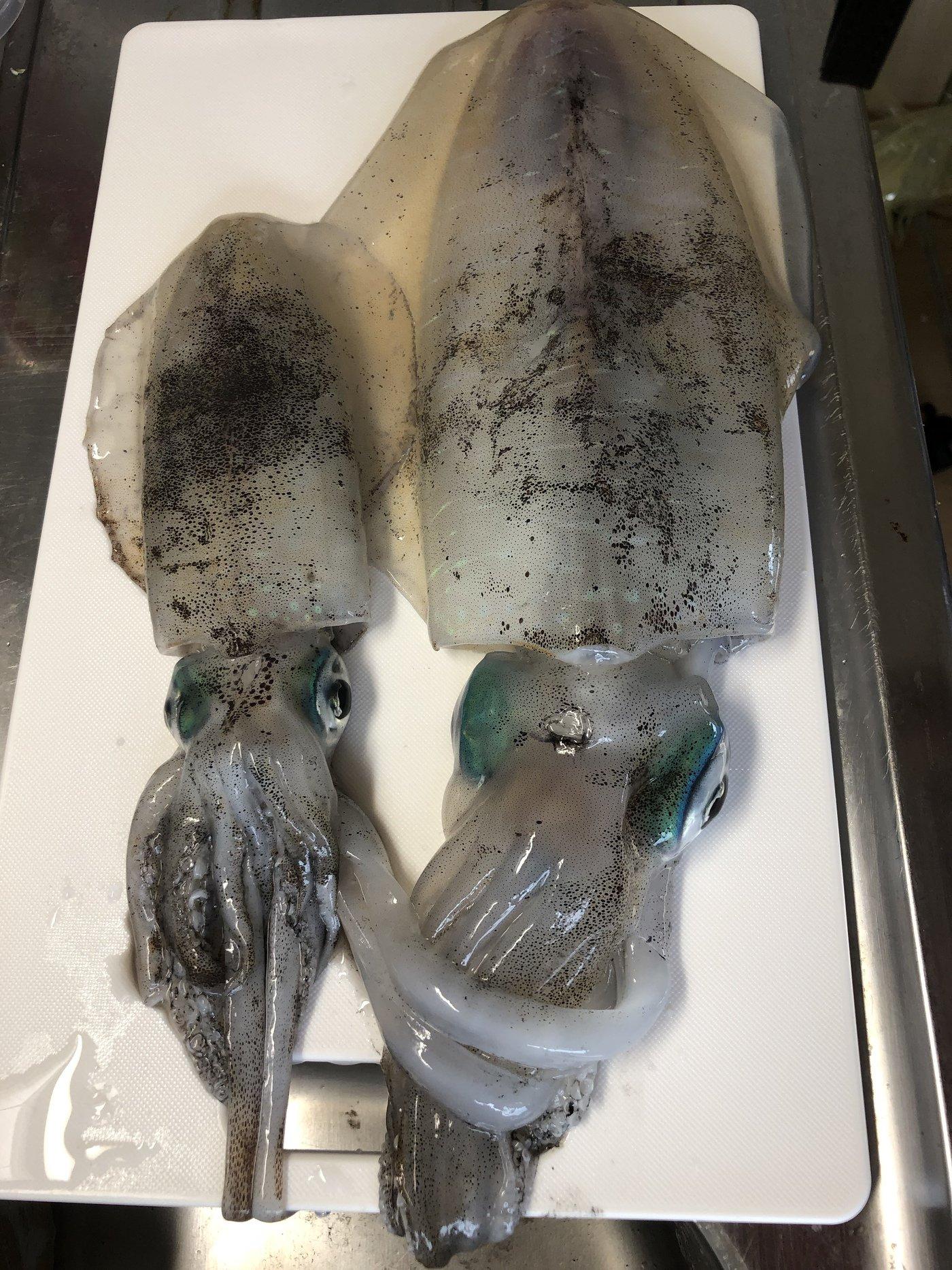 明日の野菜さんの投稿画像,写っている魚はアオリイカ