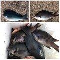 ヨッシーさんの静岡県熱海市での釣果写真