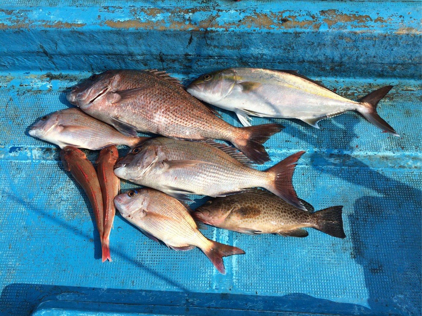 空冴さんの投稿画像,写っている魚は