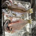 すずきさんの静岡県沼津市でのムツの釣果写真