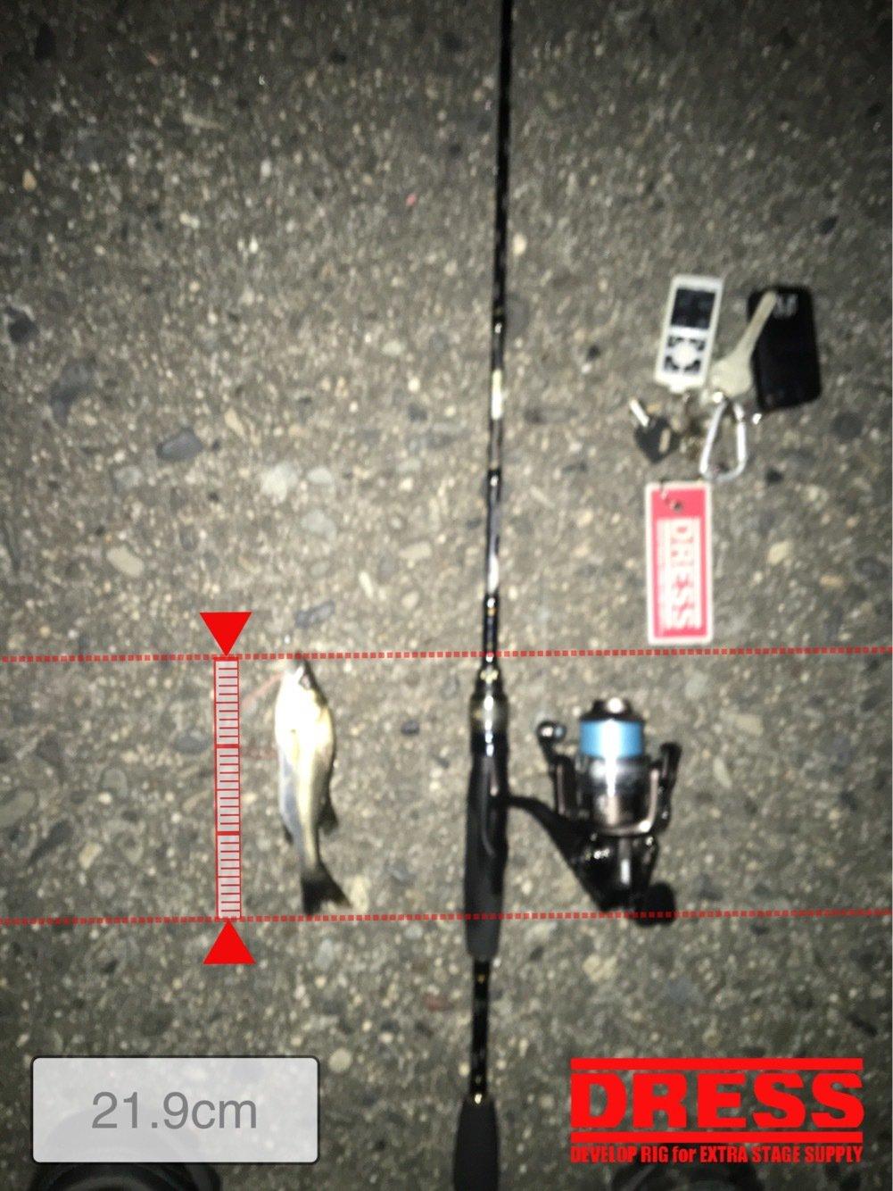 haru5427さんの投稿画像,写っている魚はスズキ