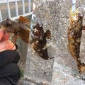 根掛かりさんの静岡県熱海市での釣果写真