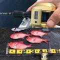 Kuniさんの神奈川県中郡での釣果写真