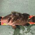 かねさんの岡山県備前市での釣果写真