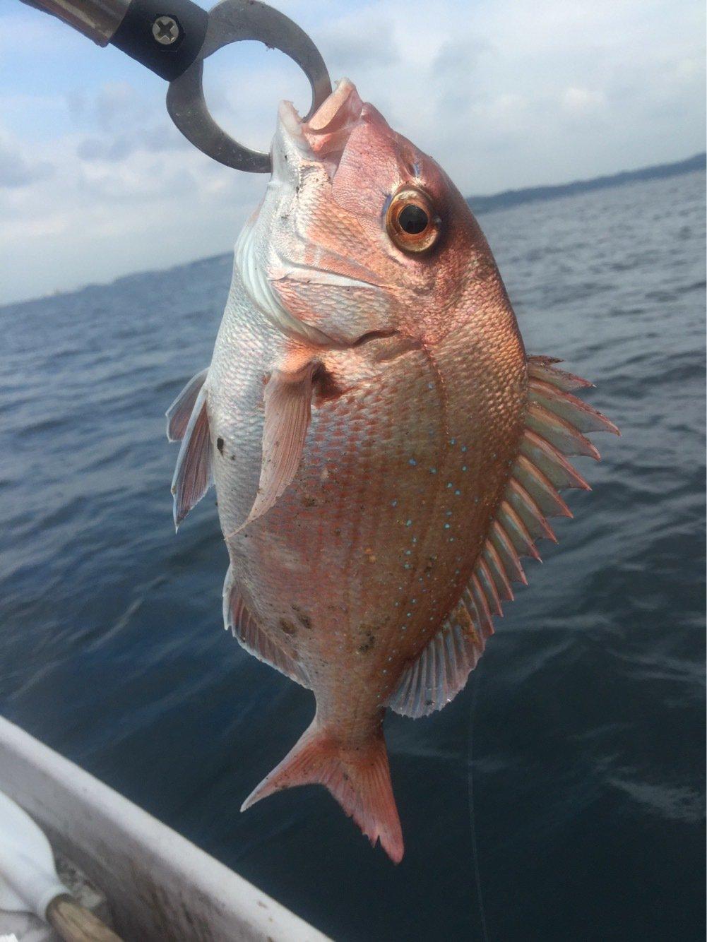 314-KTYMさんの投稿画像,写っている魚はマダイ