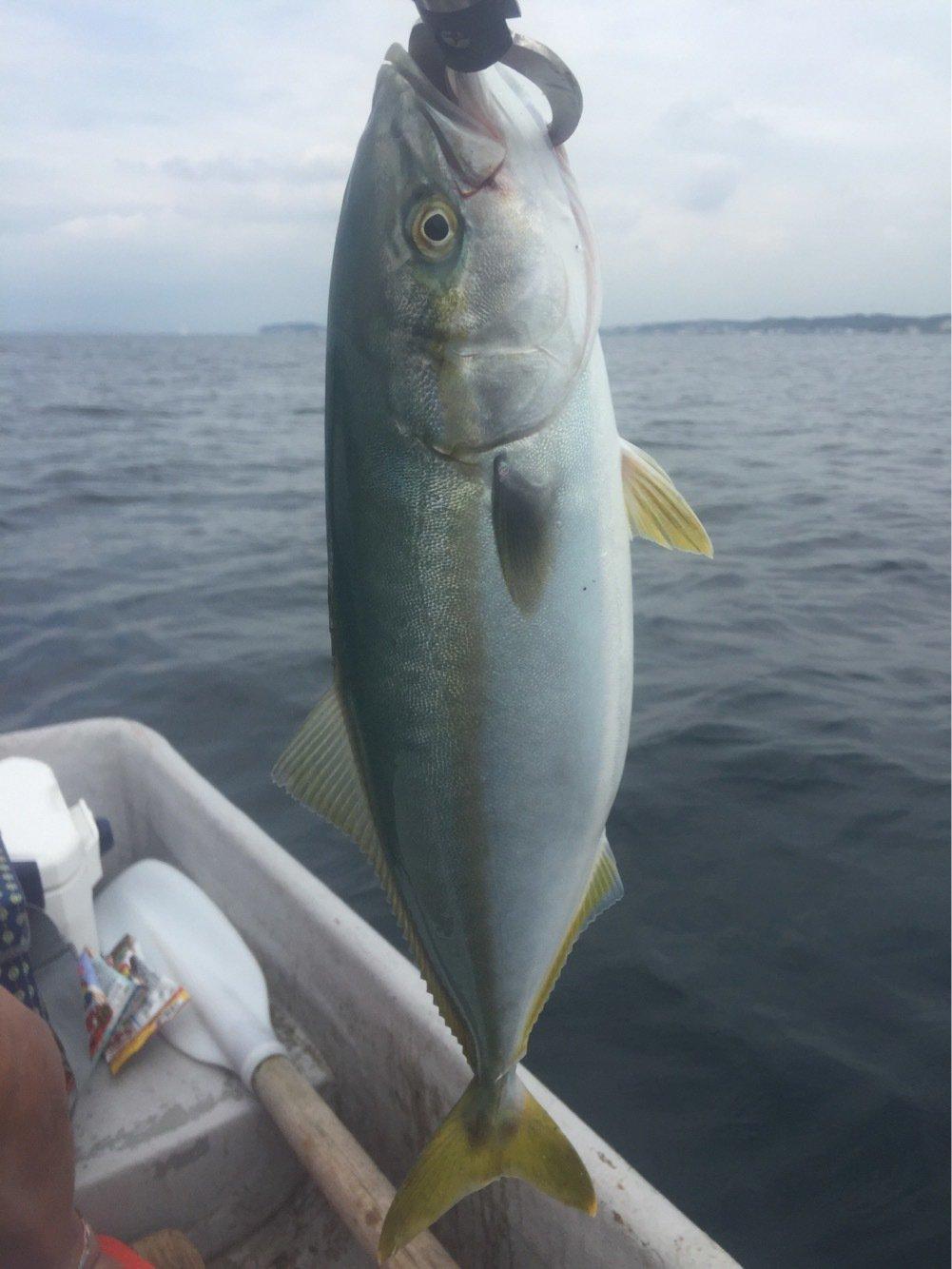 314-KTYMさんの投稿画像,写っている魚はブリ