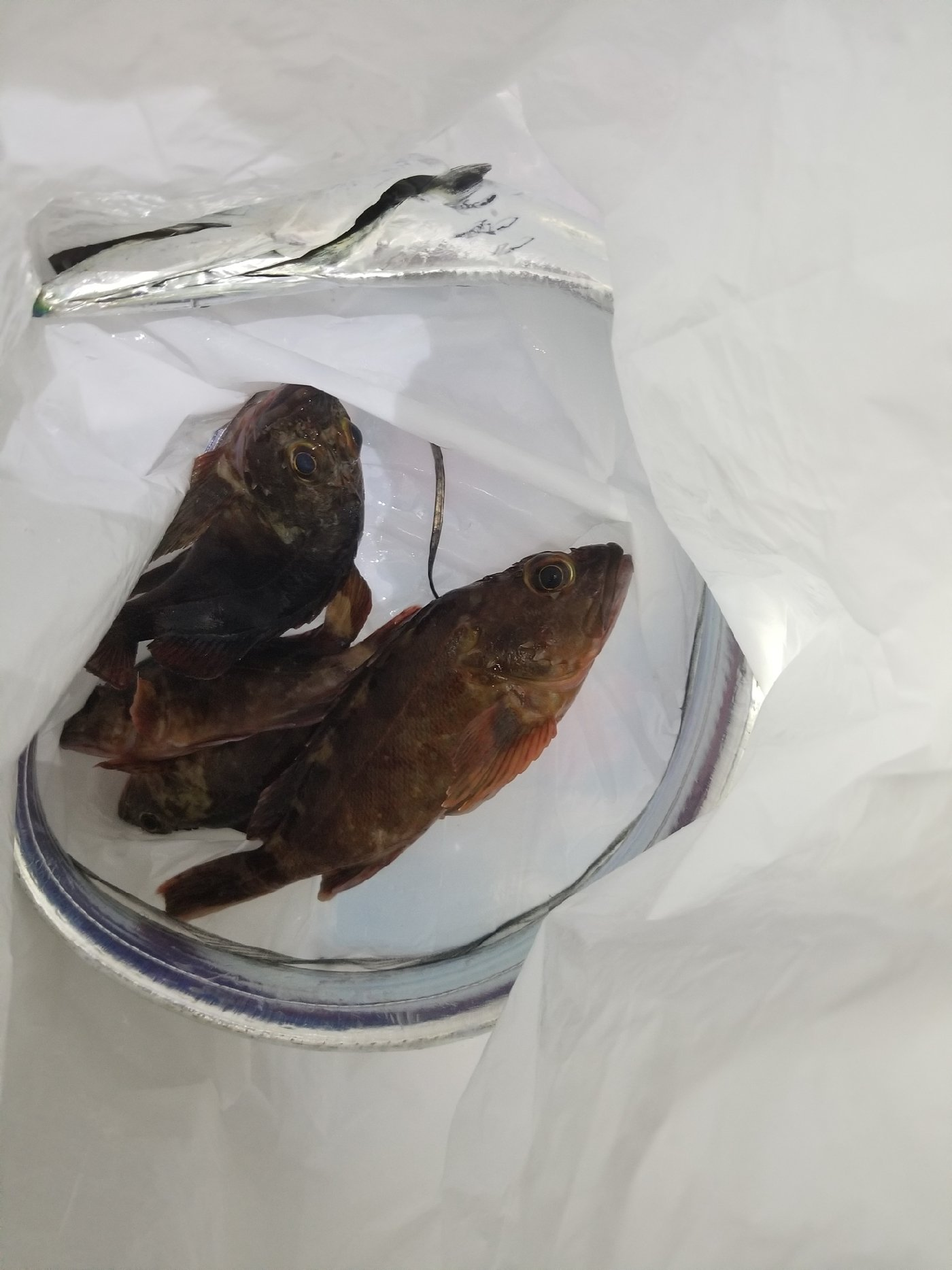 ニシヤスさんの投稿画像,写っている魚はタチウオ