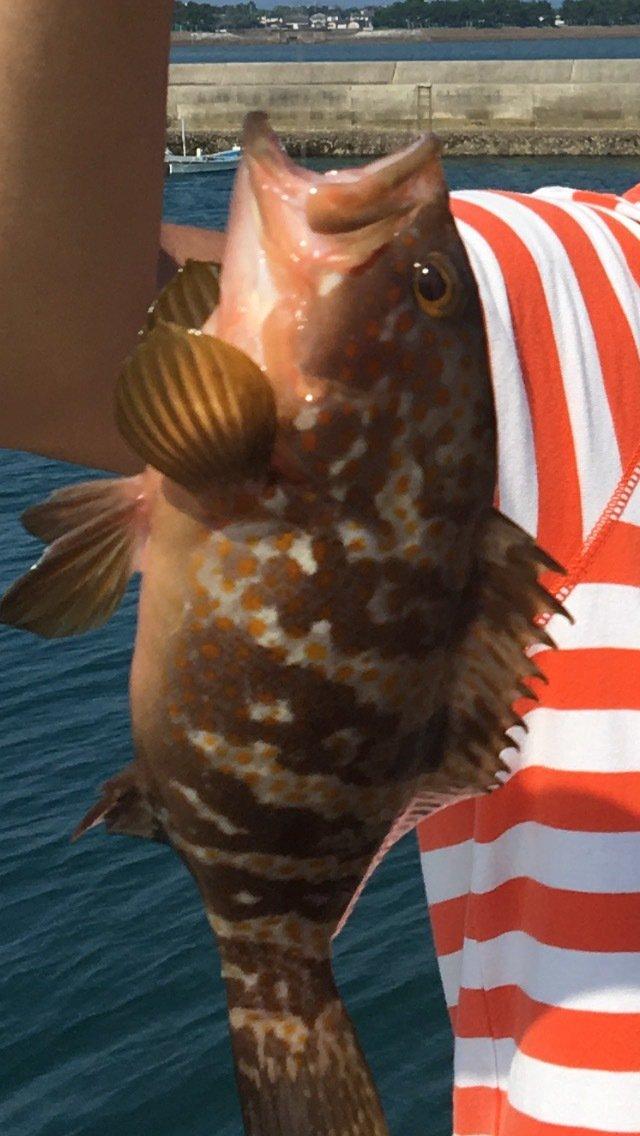 柴田さんの投稿画像,写っている魚はキジハタ