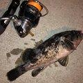 百姓漁師さんの茨城県北茨城市での釣果写真
