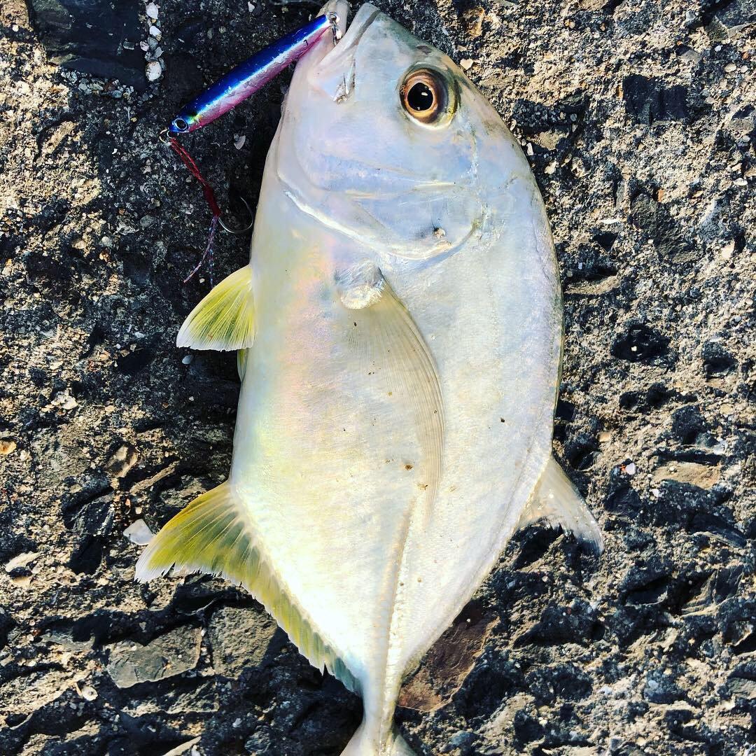 きょんさんの投稿画像,写っている魚はオニヒラアジ