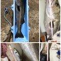 ゆうじさんの石川県金沢市での釣果写真