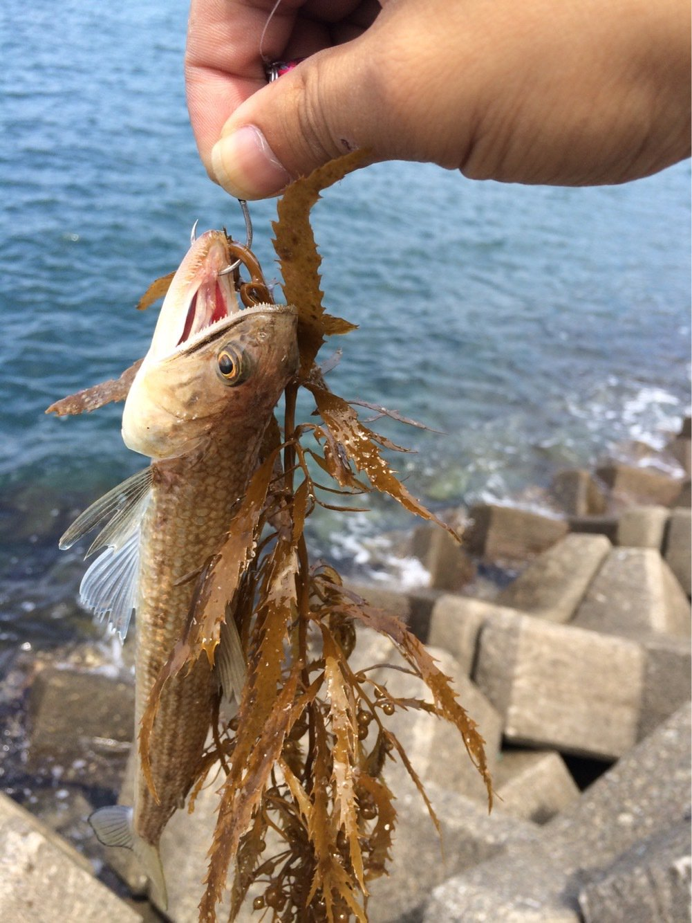 さわっちさんの投稿画像,写っている魚は