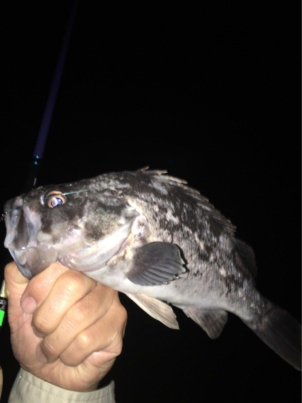 コージィーさんの投稿画像,写っている魚はクロソイ