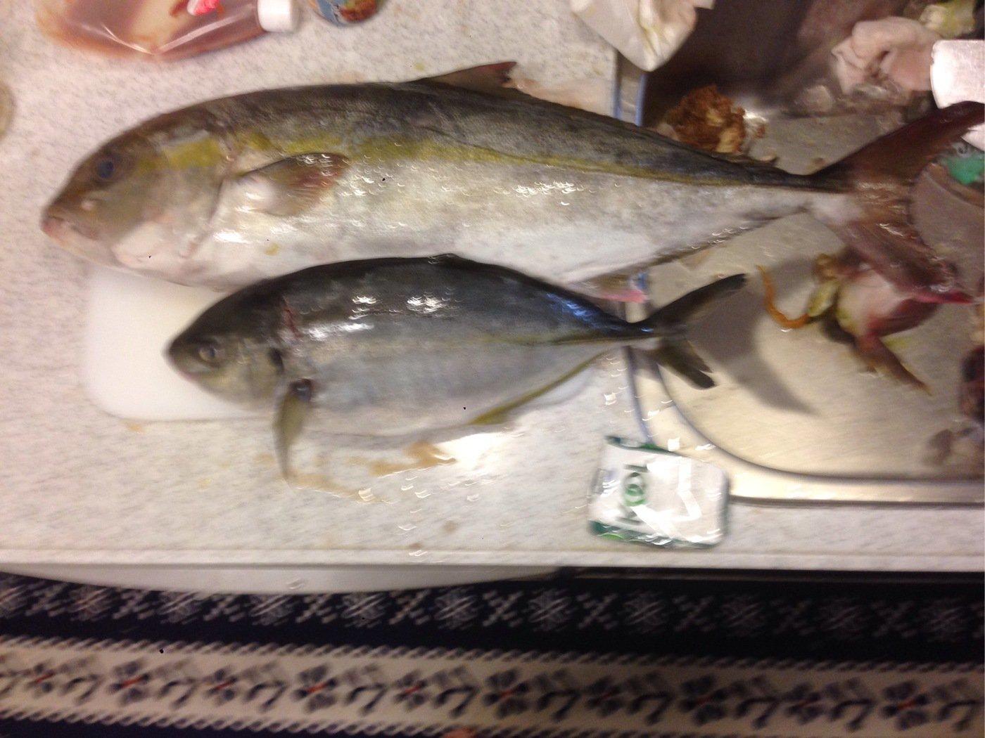 Ñøbüさんの投稿画像,写っている魚はカンパチ
