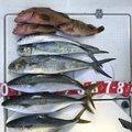 masaさんの福岡県大野城市での釣果写真