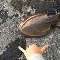 たろーさんの鹿児島県鹿屋市での釣果写真