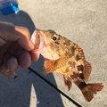 釣り場のくそ力さんの山口県山陽小野田市での釣果写真
