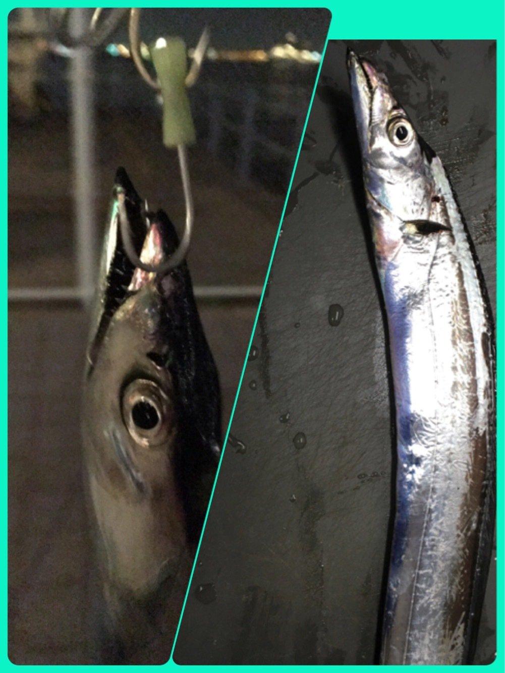 ヨネさんさんの投稿画像,写っている魚はタチウオ
