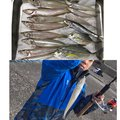 金(きん)さんのカスミアジの釣果写真