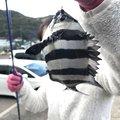 kubotaさんの京都府舞鶴市での釣果写真