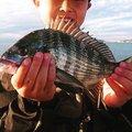 KUROSUKEさんの千葉県館山市でのクロダイの釣果写真