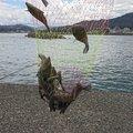 シロヒトシさんの鳥取県岩美郡での釣果写真