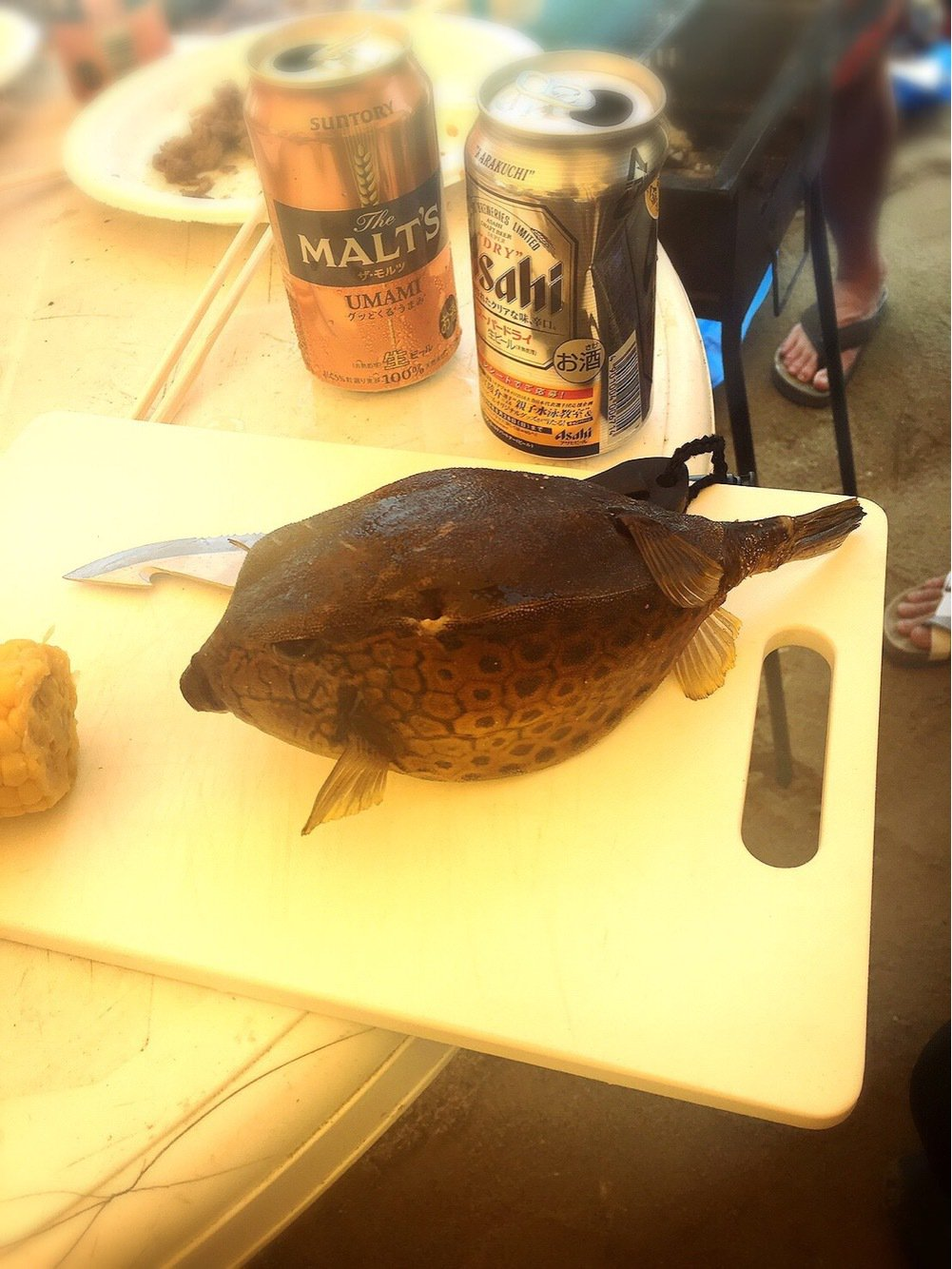 たくさんの投稿画像,写っている魚はハコフグ