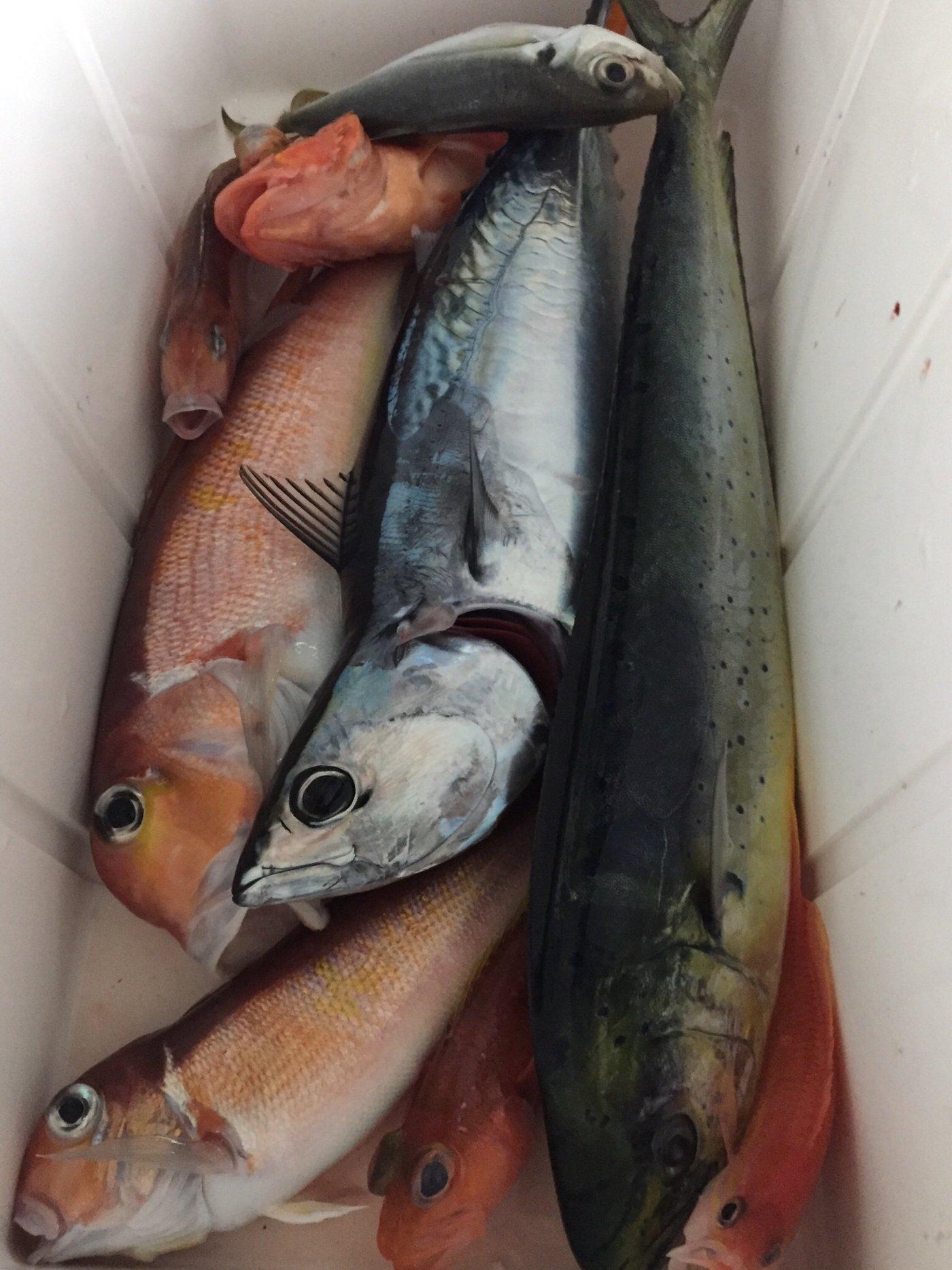 鯊太郎さんの投稿画像,写っている魚はアマダイ,シイラ,マルソウダ,