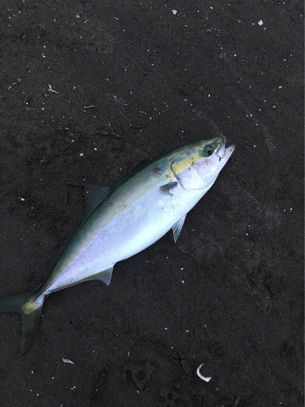 3to4さんの投稿画像,写っている魚はブリ