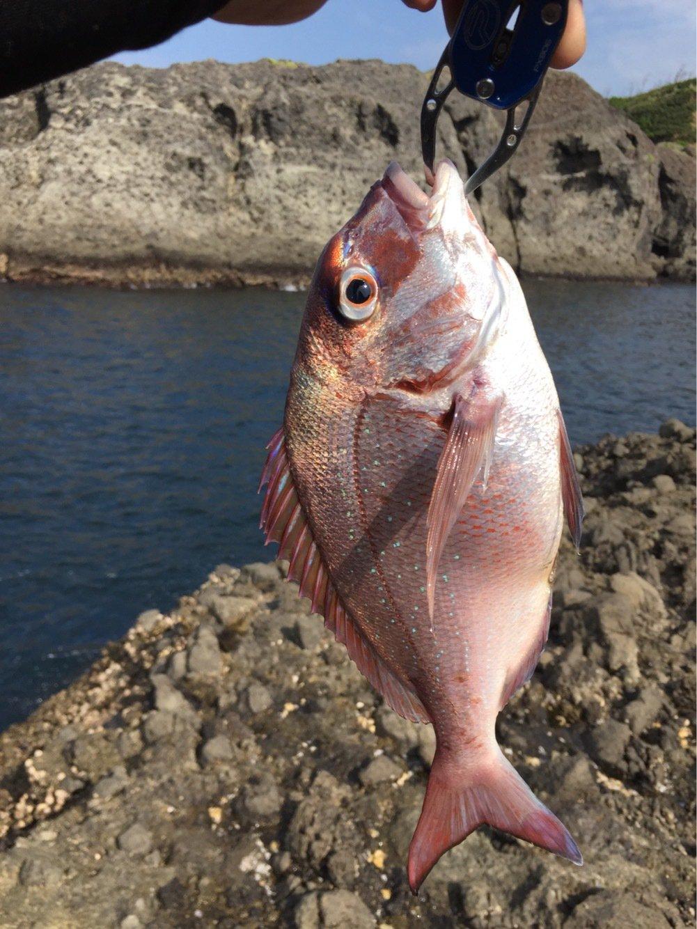 もっちさんの投稿画像,写っている魚はマダイ