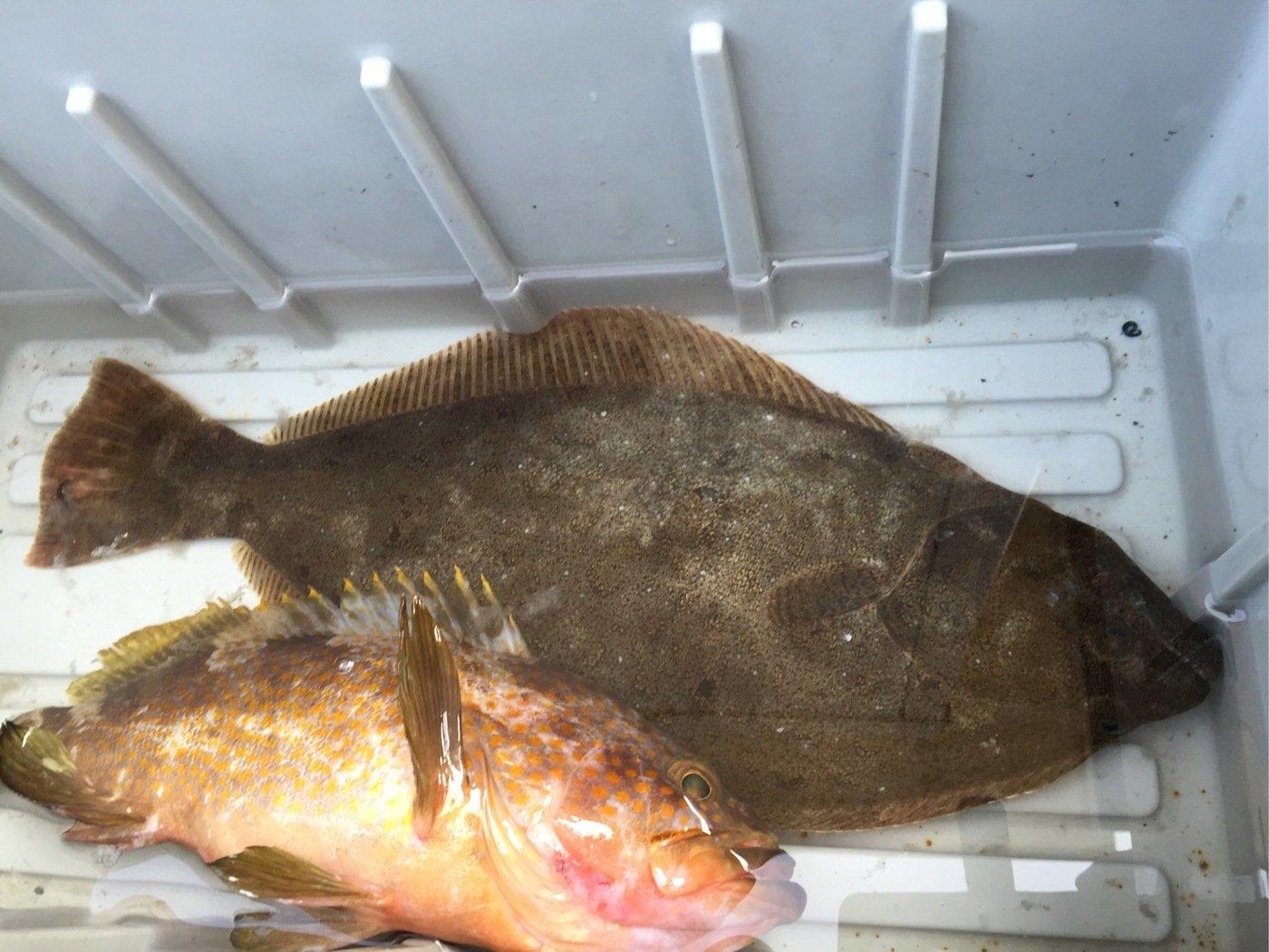 ビビさんの投稿画像,写っている魚は