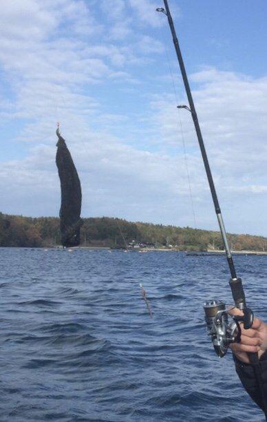 mrk586さんの投稿画像,写っている魚は