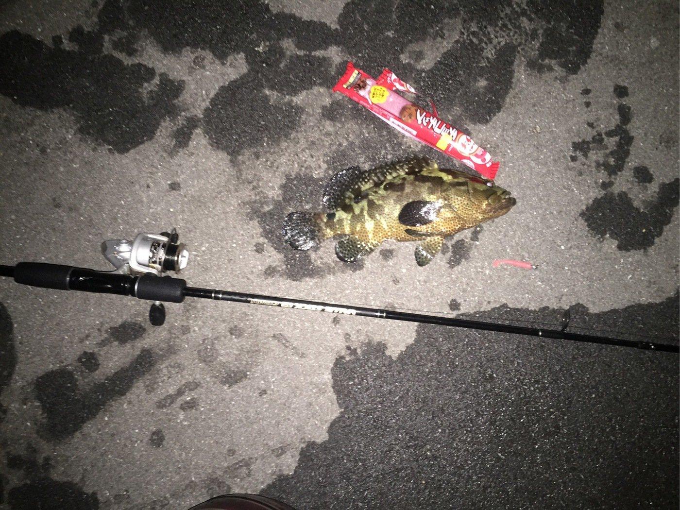 ルアー男さんの投稿画像,写っている魚は
