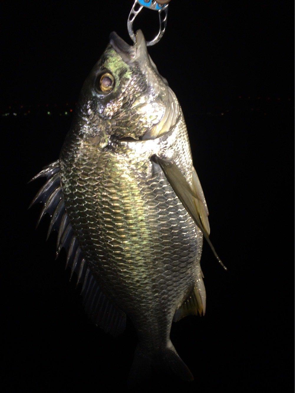 kuutokiさんの投稿画像,写っている魚は
