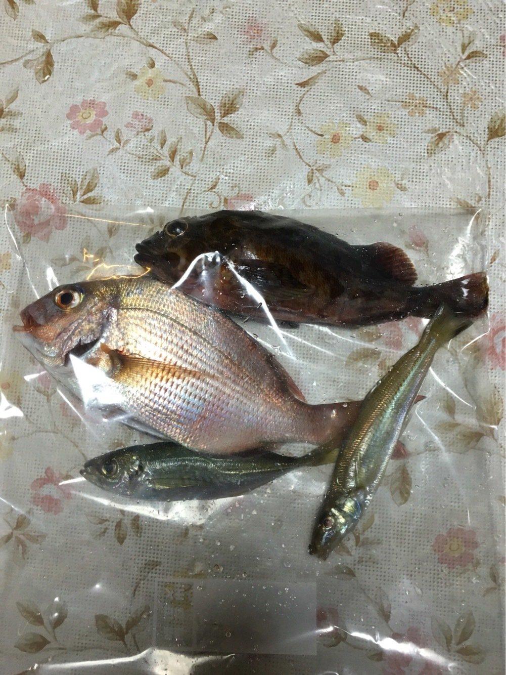 ノックさんの投稿画像,写っている魚はアジ