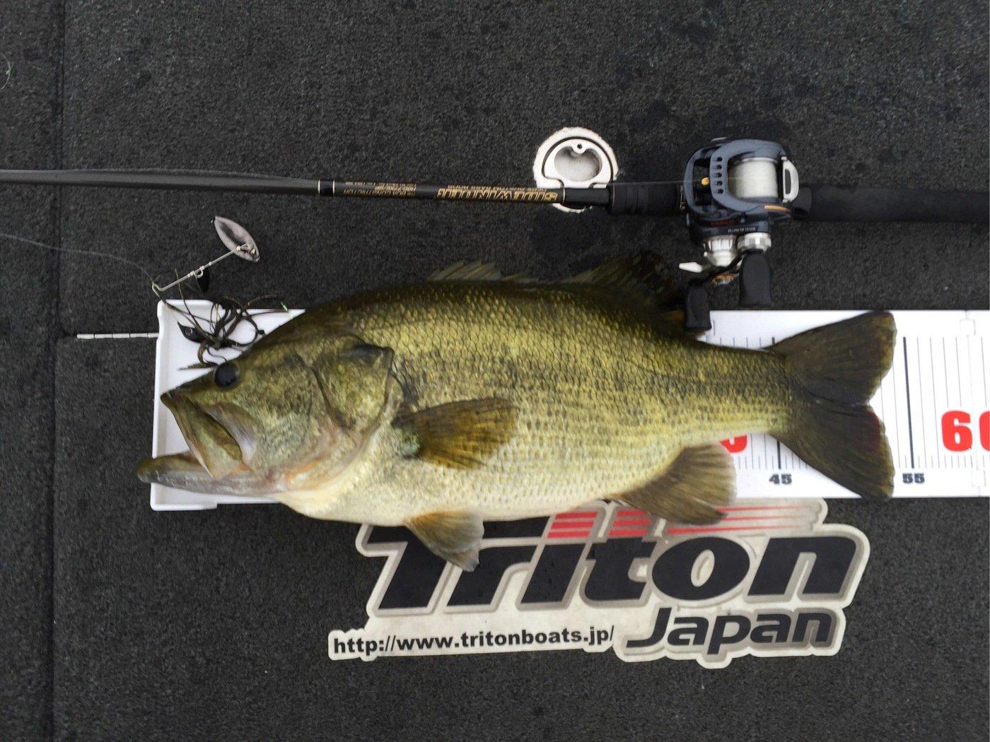 タケさんの投稿画像,写っている魚はブラックバス