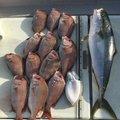 雪風さんの大分県東国東郡での釣果写真