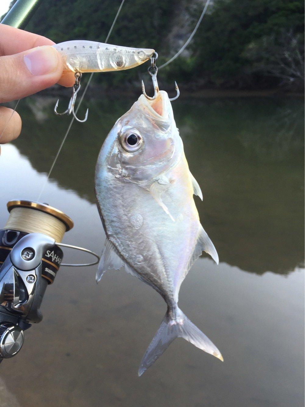 青日 千さんの投稿画像,写っている魚はロウニンアジ
