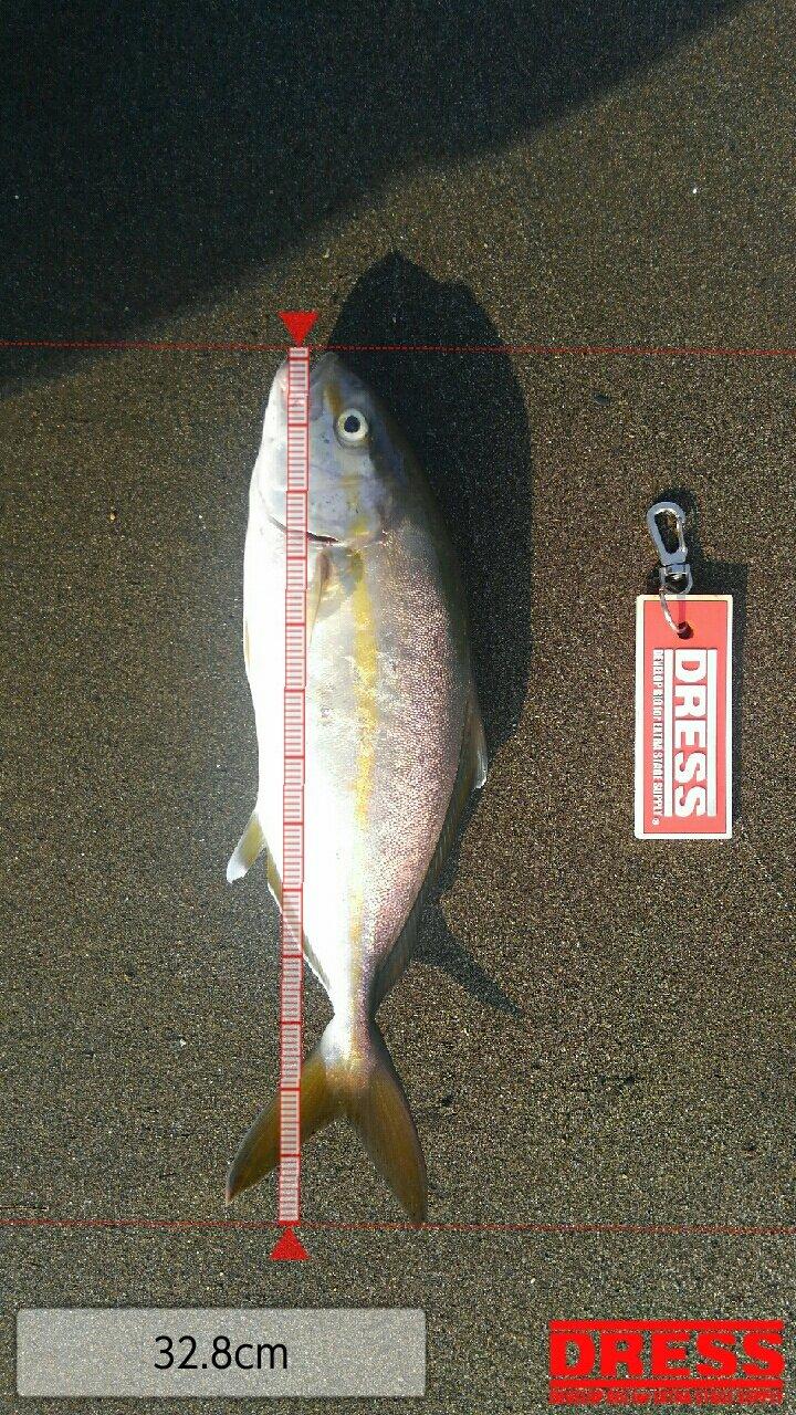 mrfjさんの投稿画像,写っている魚はカンパチ