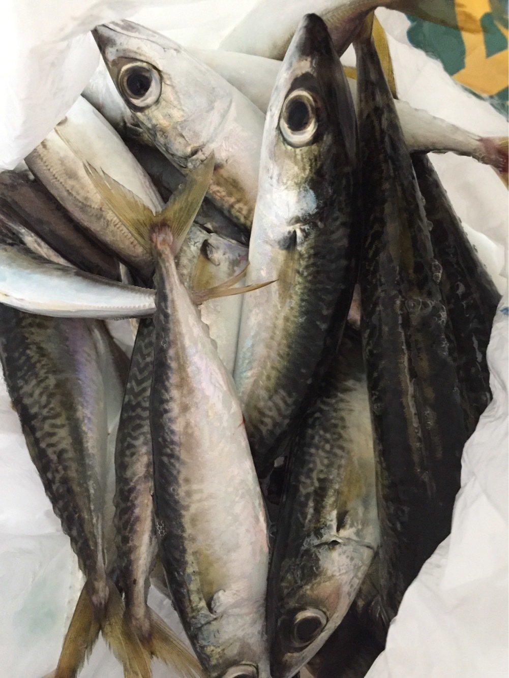 おときちさんの投稿画像,写っている魚は