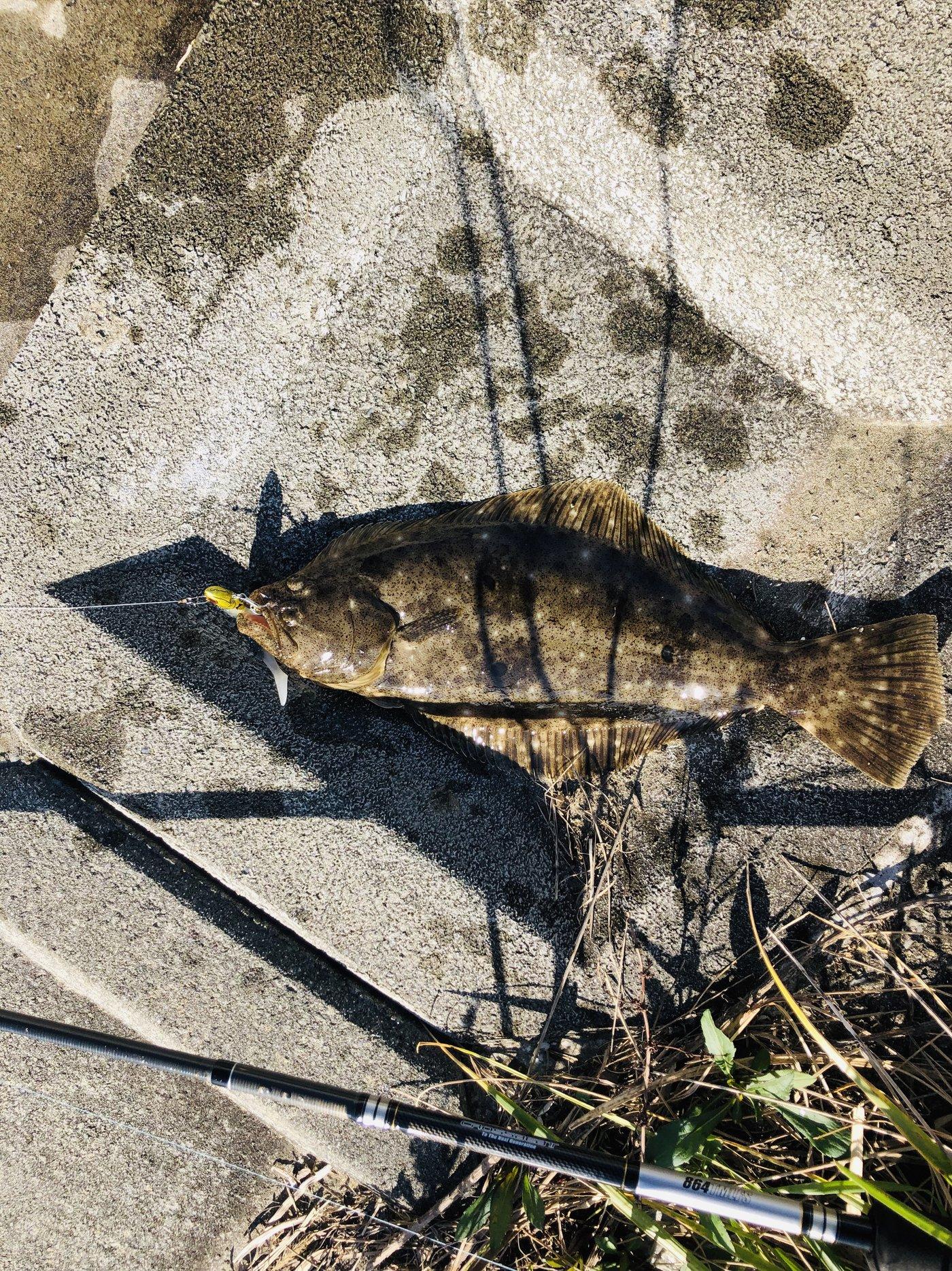 Monke Smileさんの投稿画像,写っている魚はヒラメ