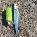ロストマンさんの鹿児島県垂水市での釣果写真