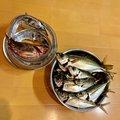 フィッシャーさんの神奈川県横浜市でのタチウオの釣果写真