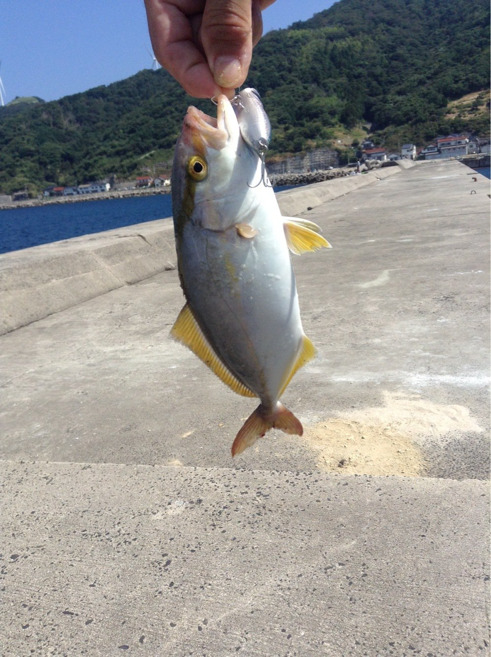 じゅうしまつさんの投稿画像,写っている魚はクロダイ