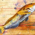 カペリンさんの北海道白老郡での釣果写真