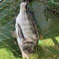 ラテス81さんの山口県玖珂郡での釣果写真
