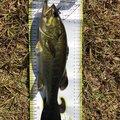 釣りに行こう!〜メシア〜さんの鹿児島県薩摩郡での釣果写真